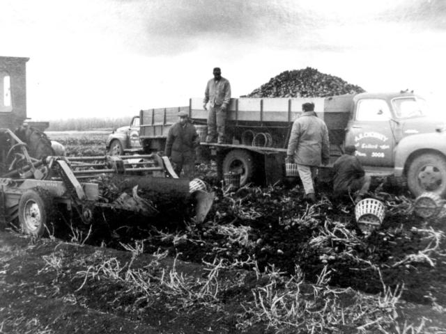 Chorney farm