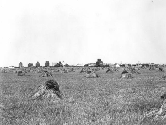 Harvesting- Wheat field & elevators - 1895