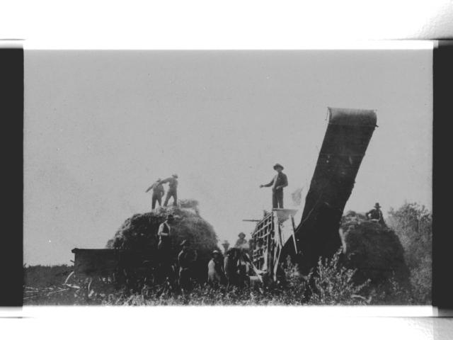Harvesting - Hays Threshing Machine