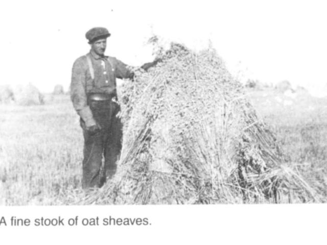 Harvesting - Stook of sheaves