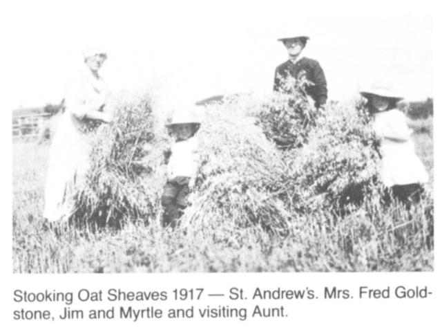 Harvesting - Stooking sheaves