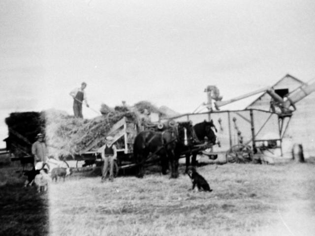 Harvesting & Threshing at the Bob Andrews farm 1943 - Jim Kenny's gang