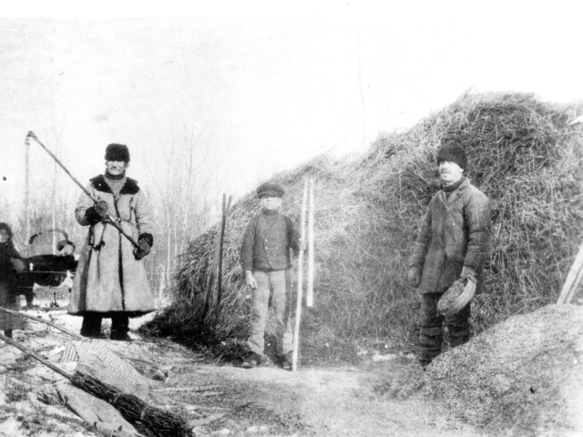 Harvesting at Gonor 1905
