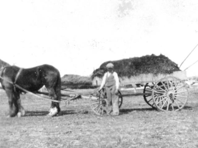 Hauling manure - Harrisons 1938