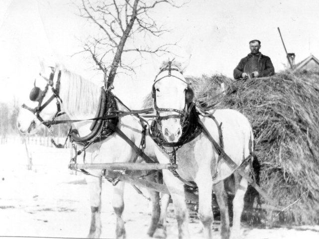 Dave Kossack hauling hay