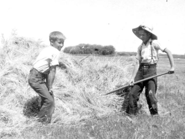 Fred Harrison making hay 1938