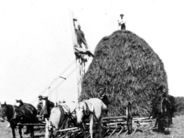Making hay on the Libau Marsh 1932 - Kosacks