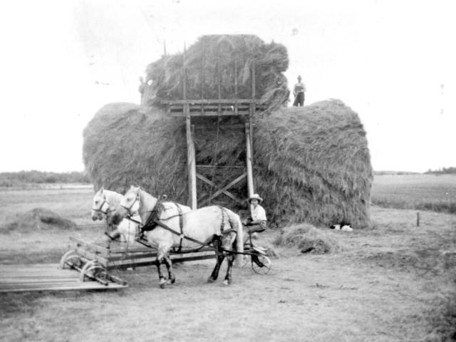 Stacking hay at Joe Gloss farm in Libau