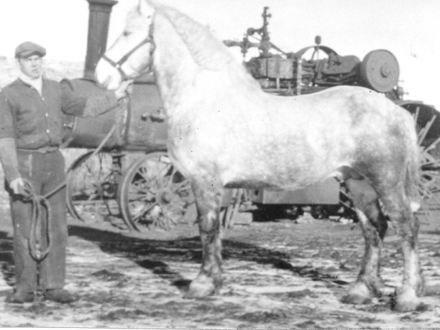 Jonasson farms prize stallion and steam engine used to break prairie