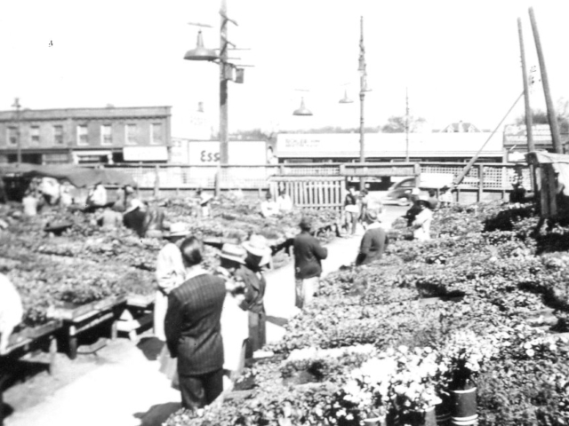 Market gardening - Wpg North End Market - Kuzminski stand 1946