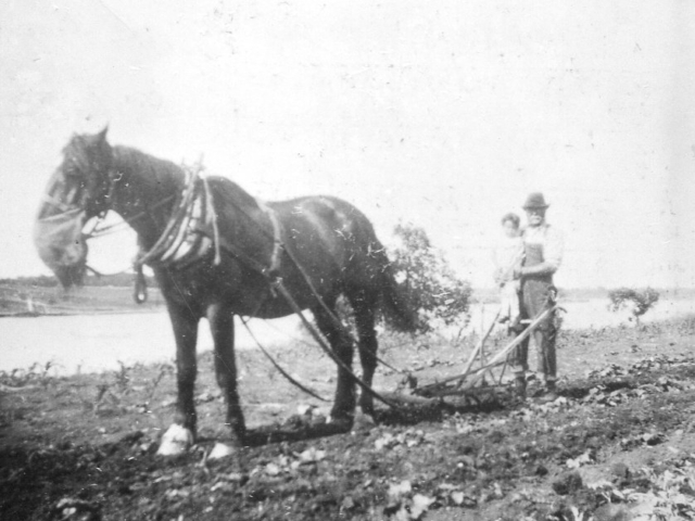 Market gardening - cultivating by the Red River