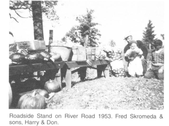 Market gardening - Road side stand - Skromeda