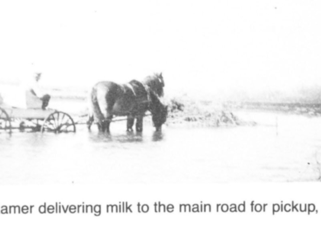 Milk - Delivering milk to the road for pickup