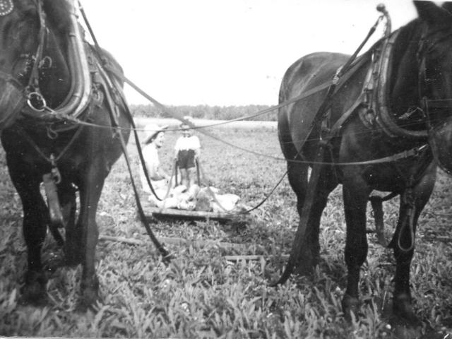 Picking stones 1942