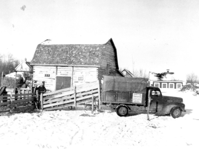 Shipping hogs at East Selkirk