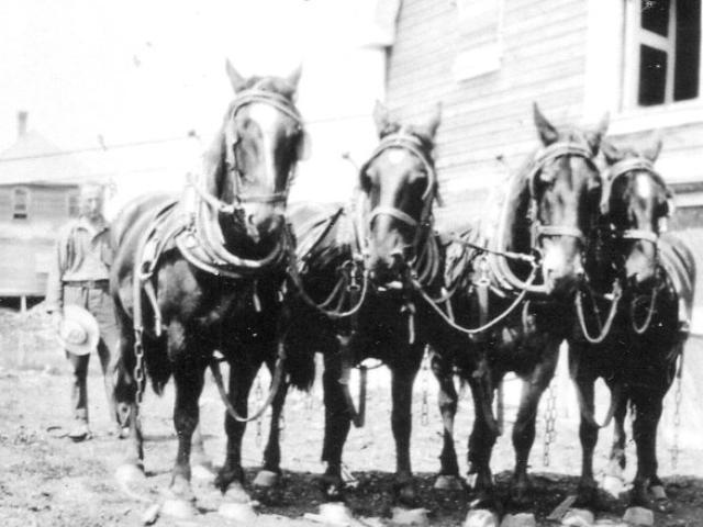 Sifton Horses
