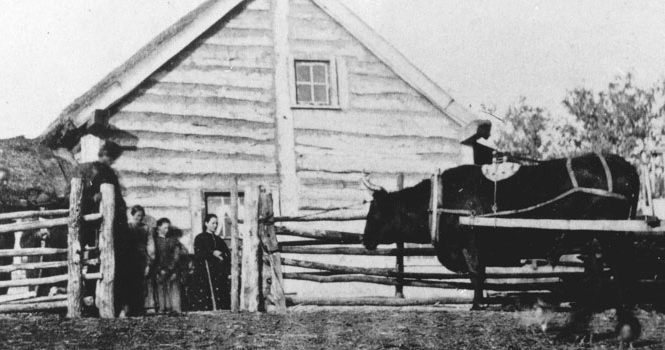 Ox hitched to Red River cart in front of a Métis log home