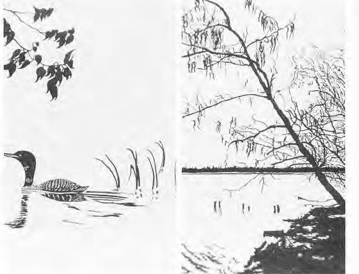 Sketches of Gull Lake
