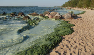 Foaming sludge at Victoria Beach, Manitoba