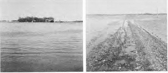1960 Flooding, St. Peter's Road towards the marsh gate, 1960.